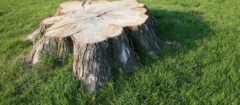 home-stump